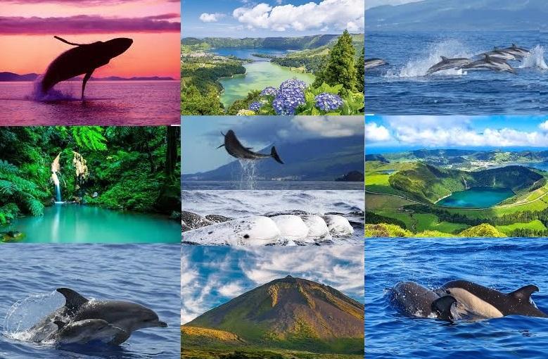 Voyage Initiatique aux Açores juillet 2020