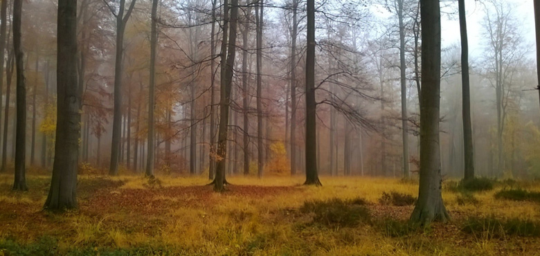 Ateliers : Shinrin Yoku (bains de forêts japonais) au fil des saisons