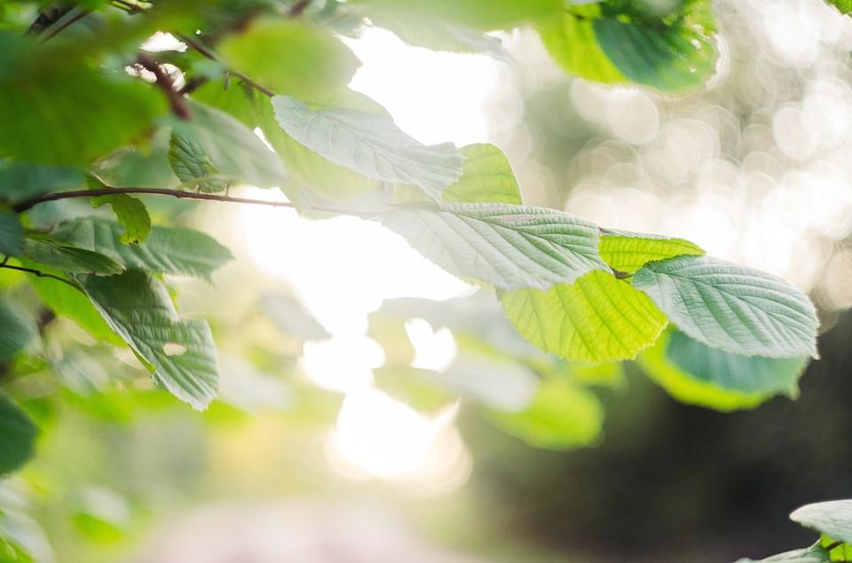 Cycle mindfulness d'approfondissement à Nivelles dimanche matin