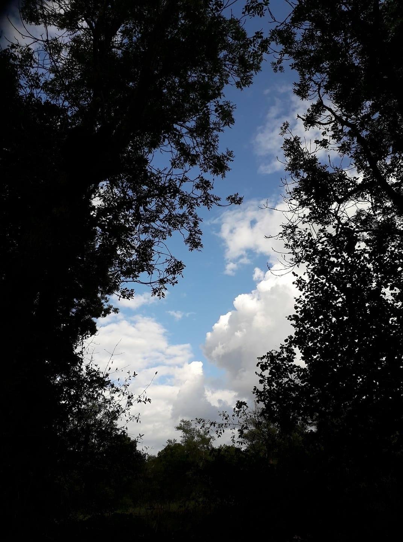 Programme de méditation de pleine conscience (8 semaines)