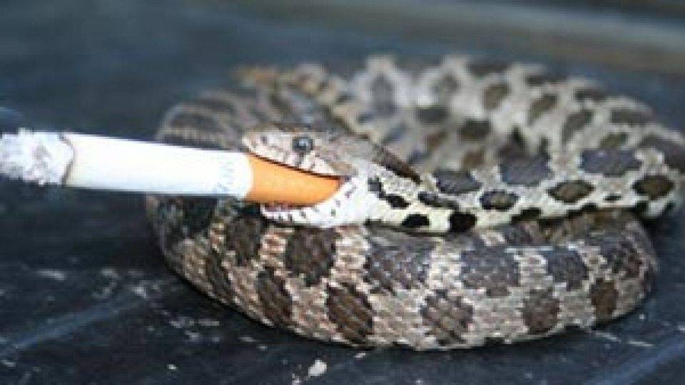 Sevrage tabac et phobies (hypnose et thérapie brève)