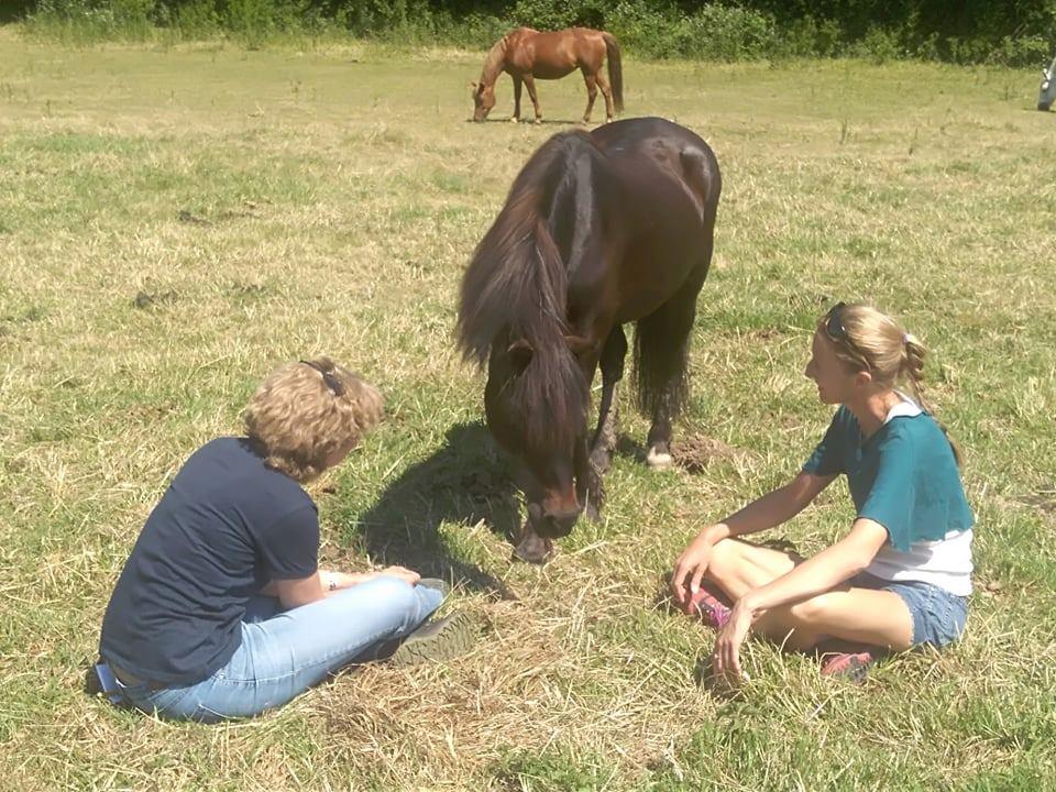 Yoga pour Adultes au coeur du troupeau de chevaux